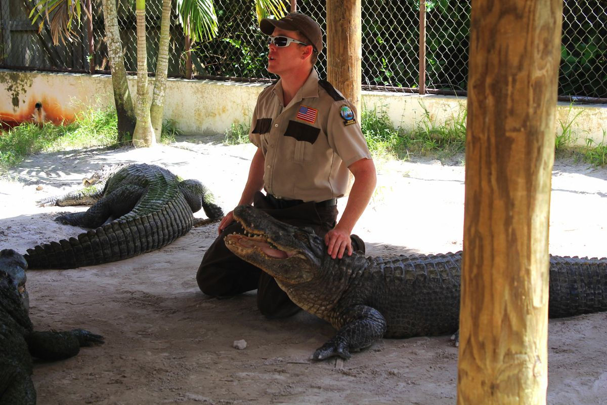 Things to do in Florida: Visiting The Everglades on Hand Luggage Only Blog (10)