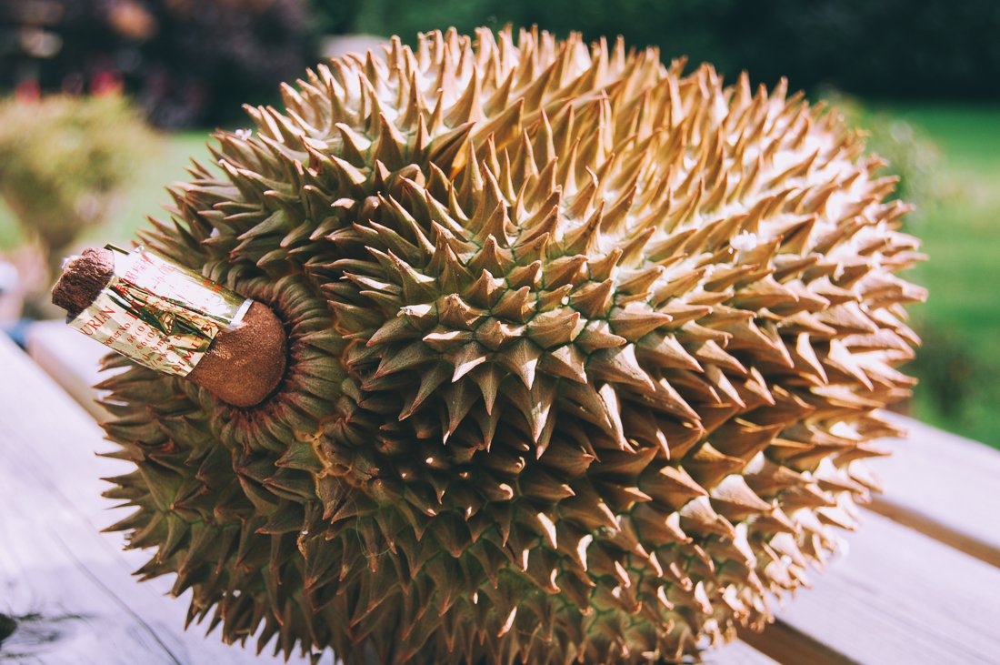 Advice on eating Stinky Smelly Durian Fruit (1)