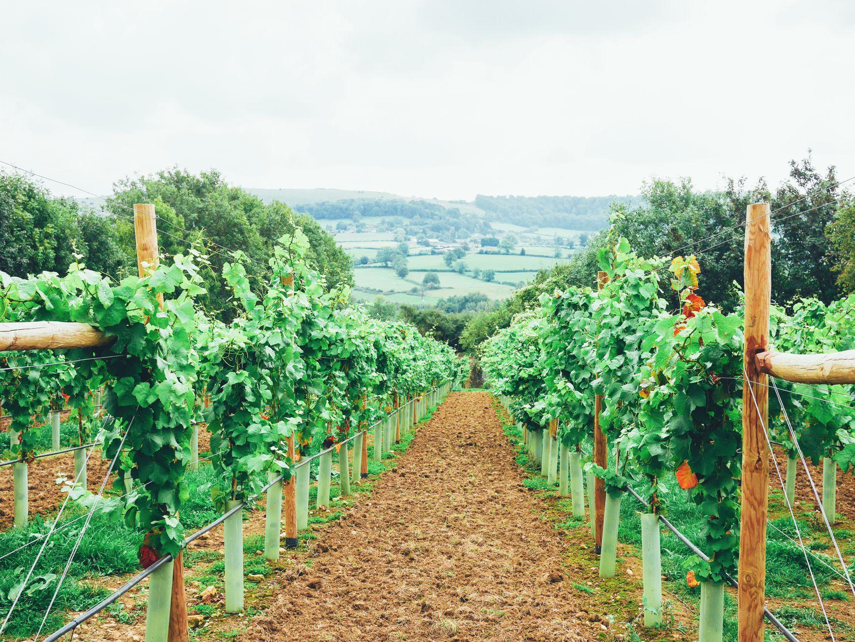 English Countryside Walking (3)