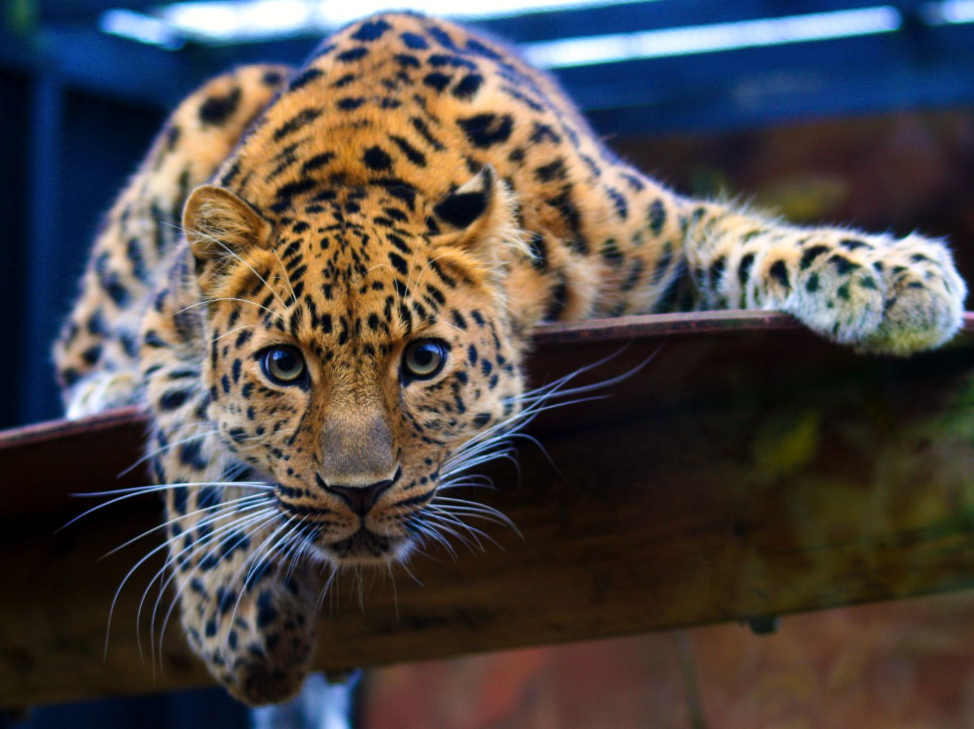 16 Of The Rarest Animals In The World And Where To Find Them! (2)