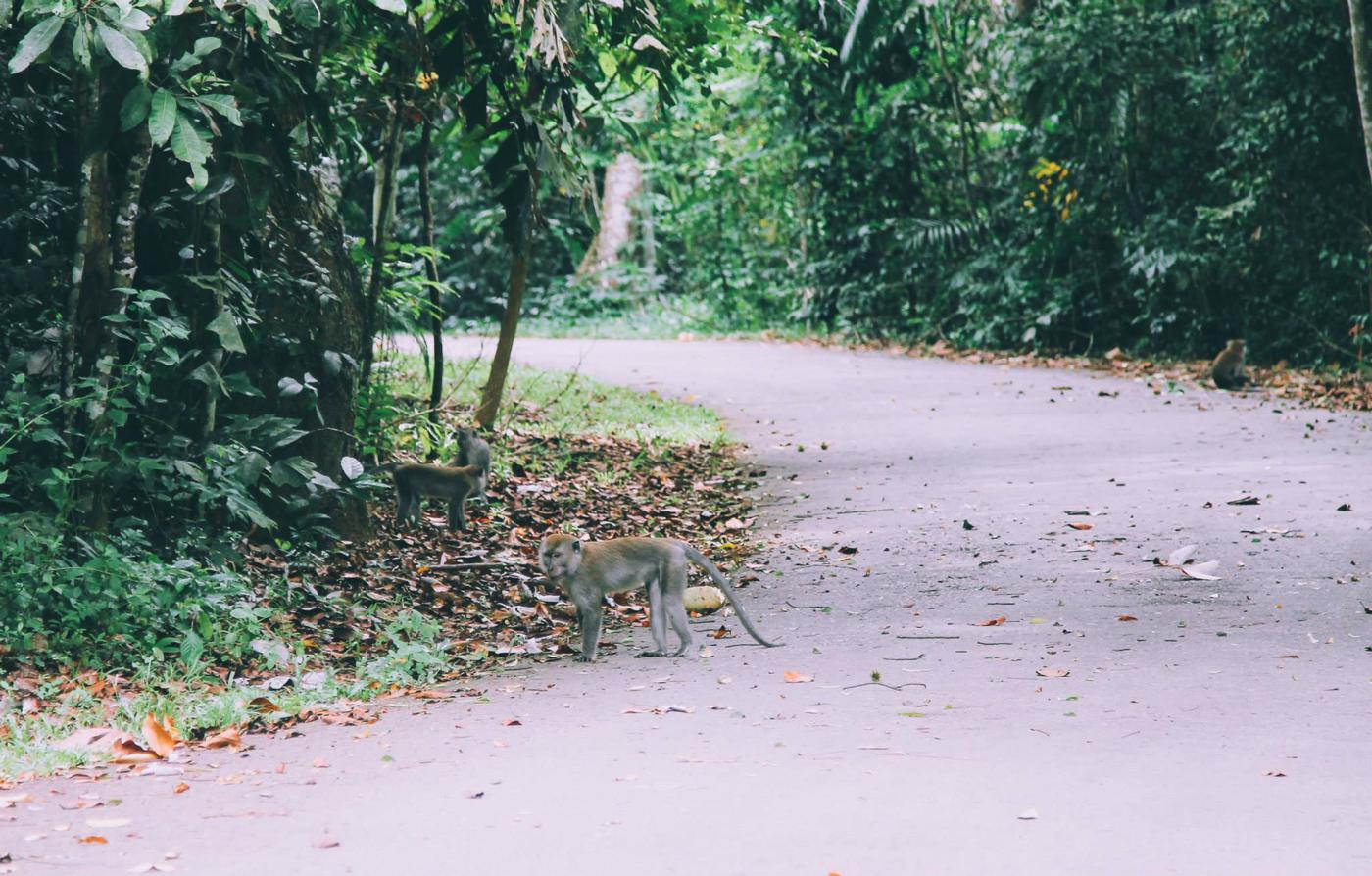 Going Off The Beaten Track in Singapore: Exploring Ubin Island... (14)