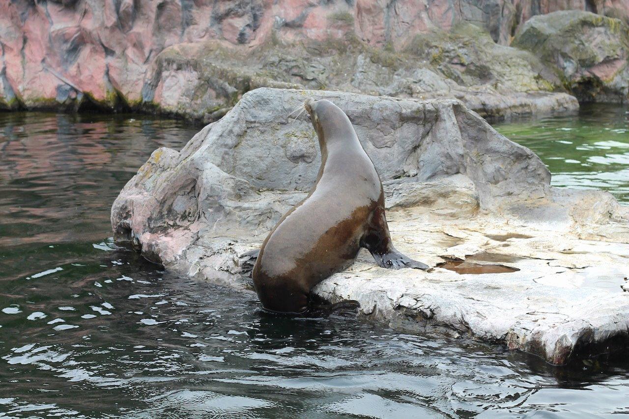 Animals at ZOOM Erlebniswelt Gelsenkirchen, Germany (25)