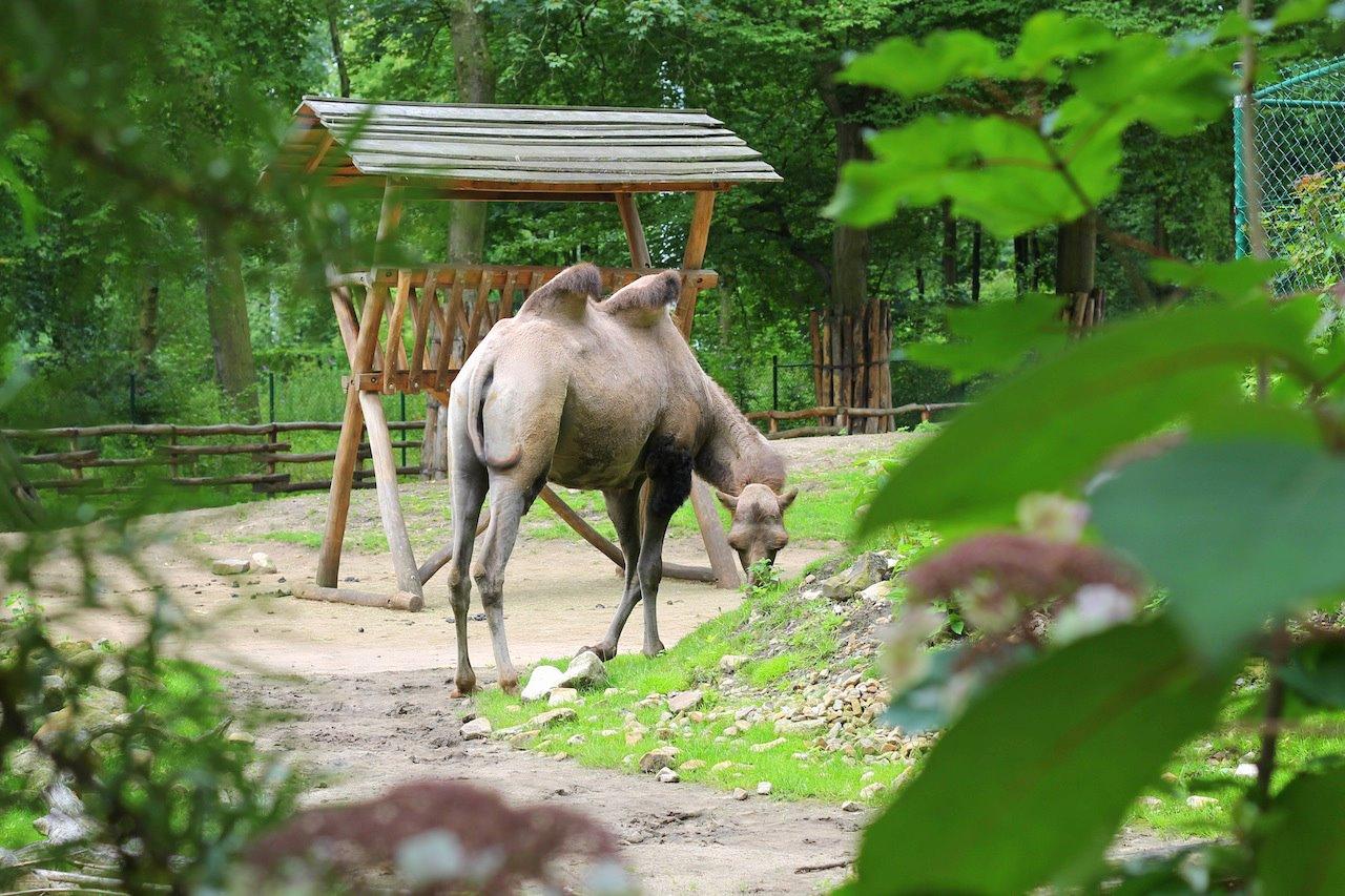 Animals at ZOOM Erlebniswelt Gelsenkirchen, Germany (4)