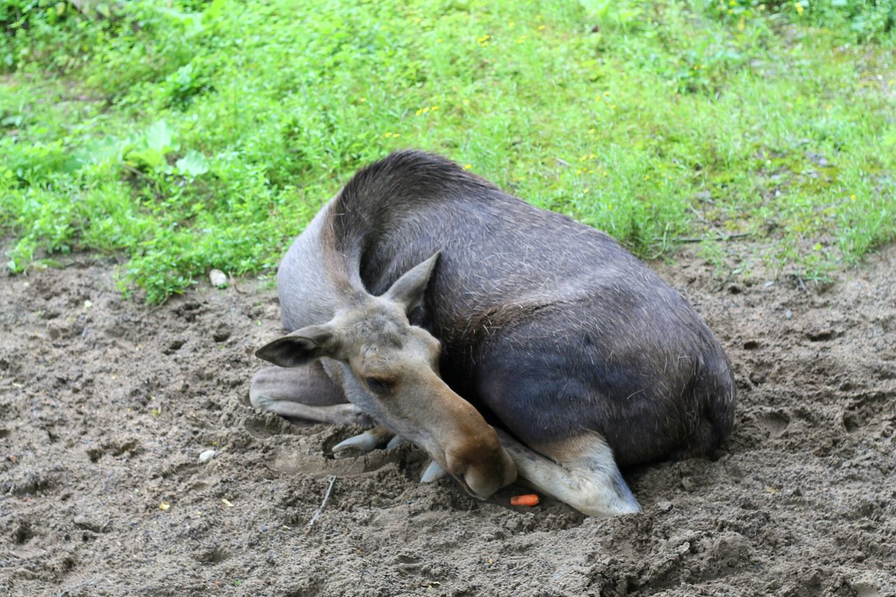 Animals at ZOOM Erlebniswelt Gelsenkirchen, Germany (27)