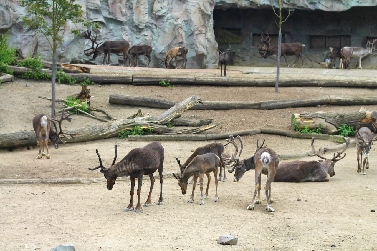 Animals at ZOOM Erlebniswelt Gelsenkirchen, Germany (23)