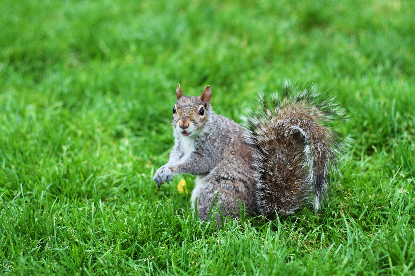 Squirrels, Strawberries And Frozen Yoghurts in Harvard (1)
