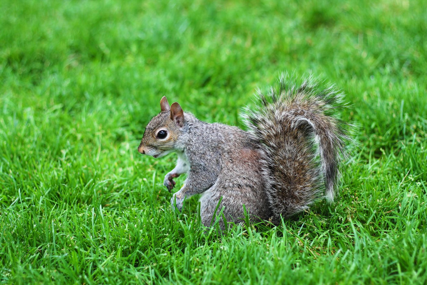 Squirrels, Strawberries And Frozen Yoghurts in Harvard (3)