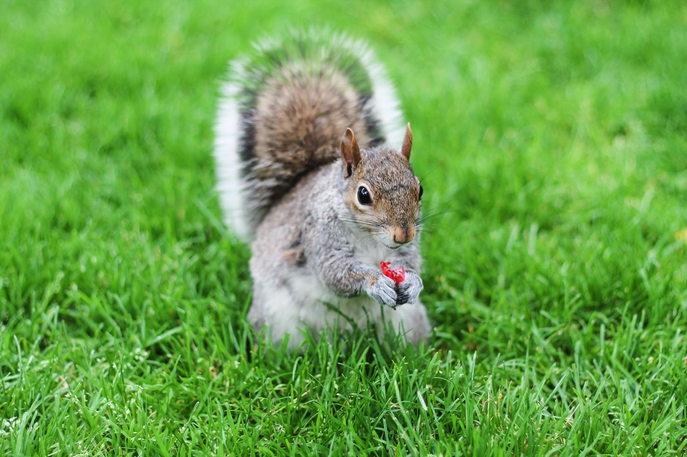 Squirrels, Strawberries And Frozen Yoghurts in Harvard (4)