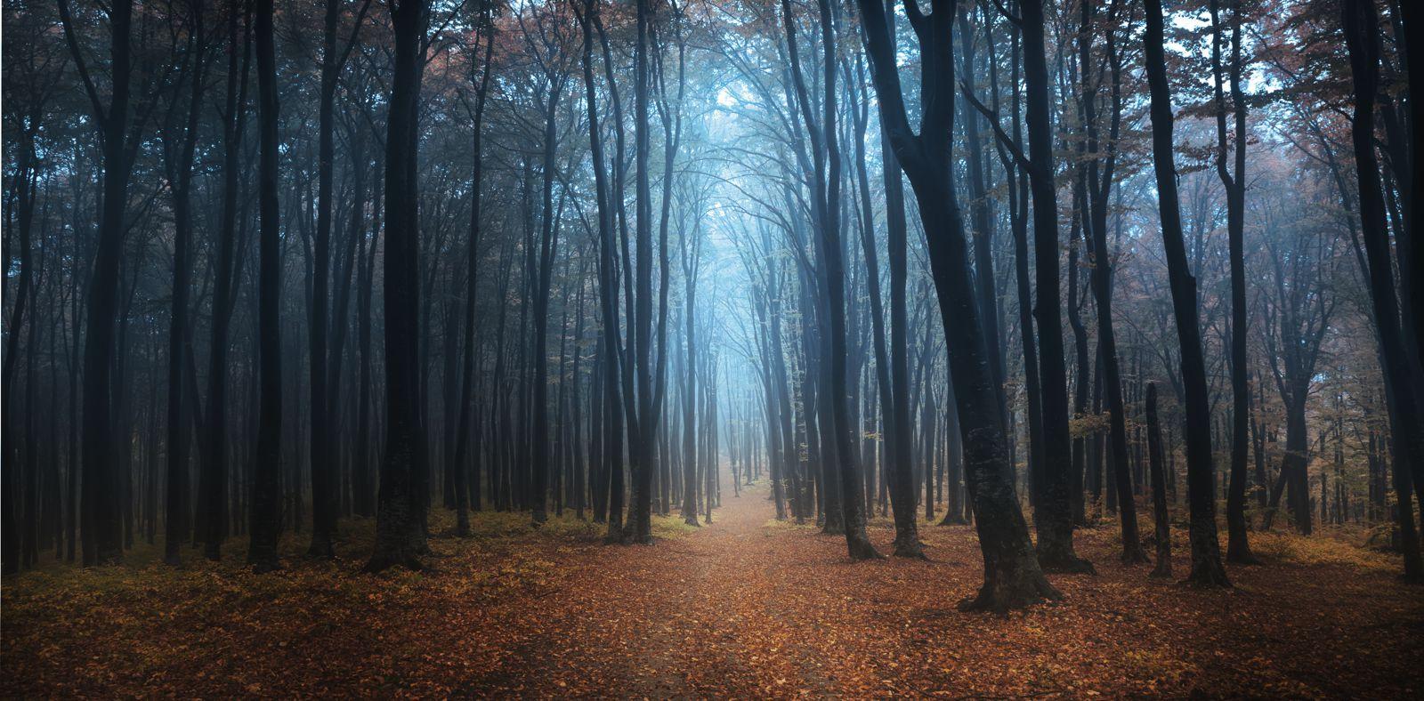 المغامرات ...؟ أغرب الغابات