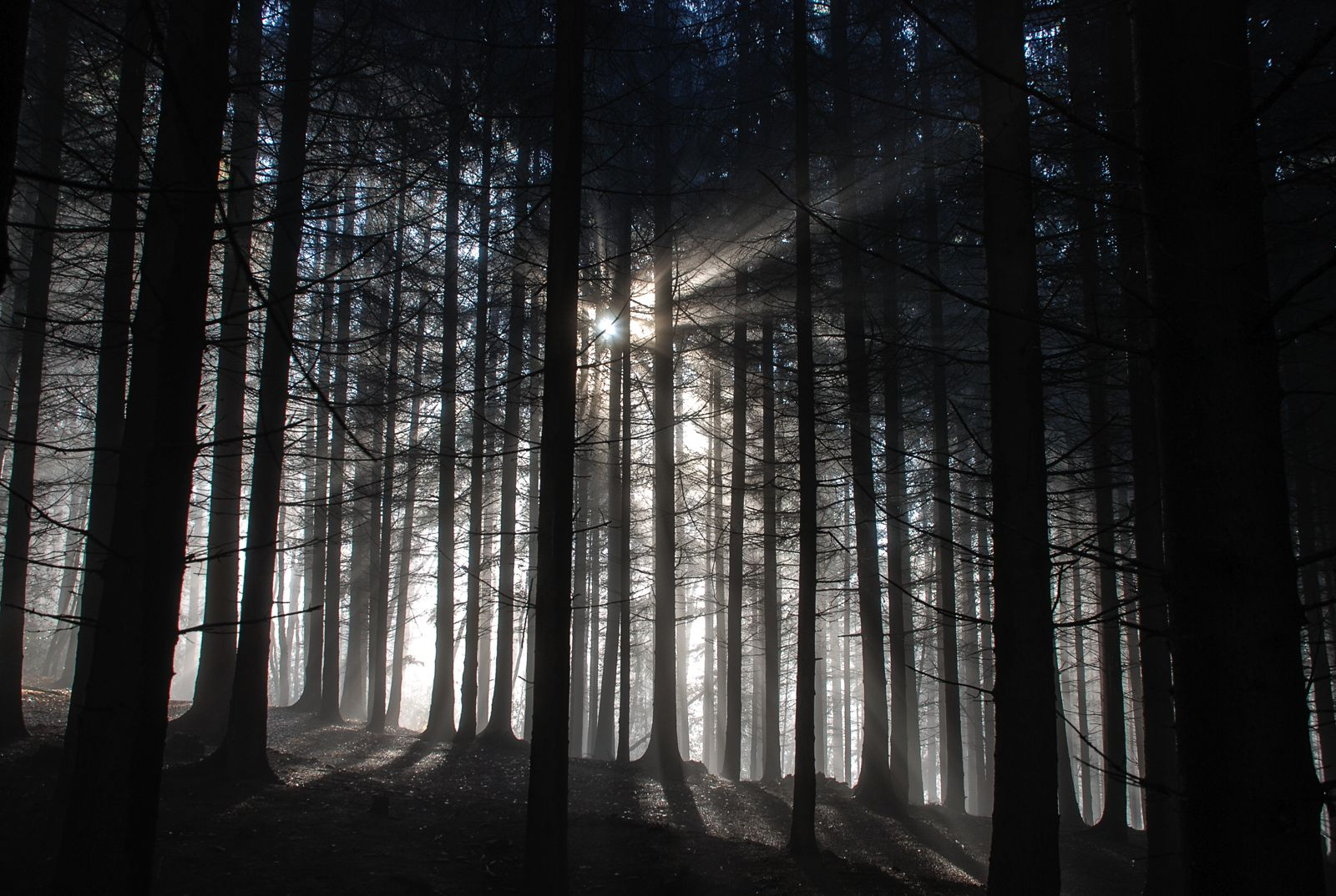 7 Magical Photos That Will Make You Want To Visit The Black Forest In Germany (4)