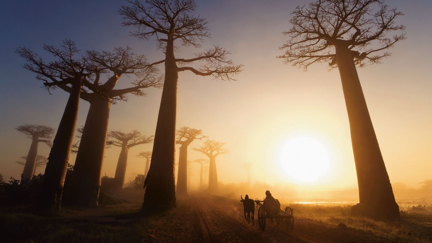 Related Keywords &amp Suggestions For Madagascar Landscape