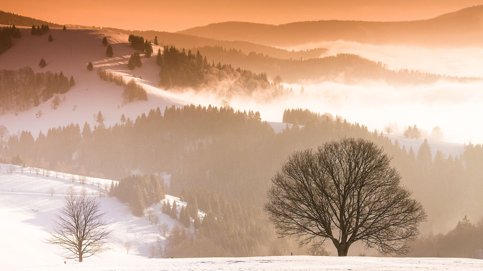 7 Magical Photos That Will Make You Want To Visit The Black Forest In Germany (7)