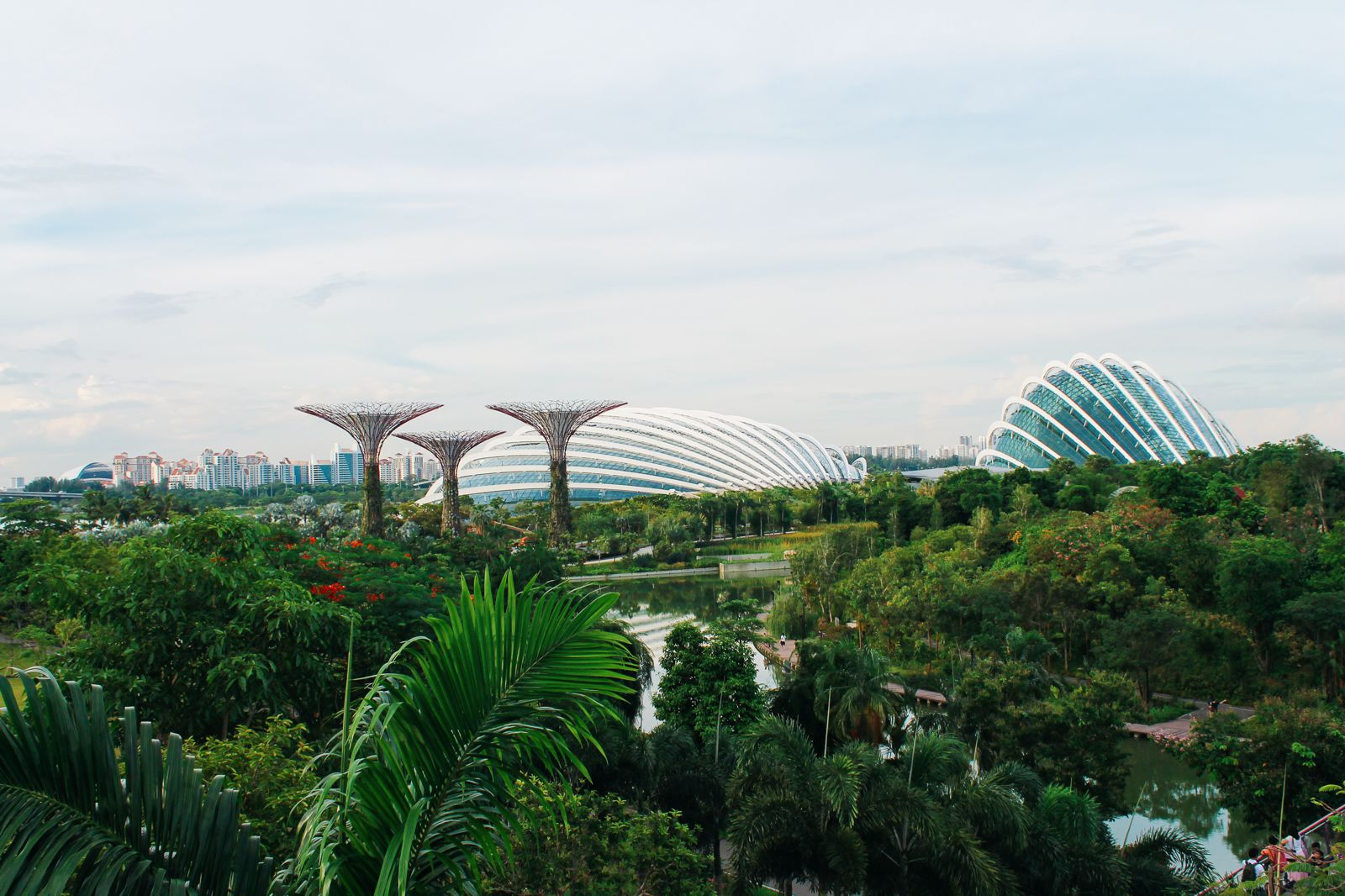 Under The Dome And Into The Forest... In Singapore, Flower Dome and Cloud Forest, Gardens By The Bay (1)
