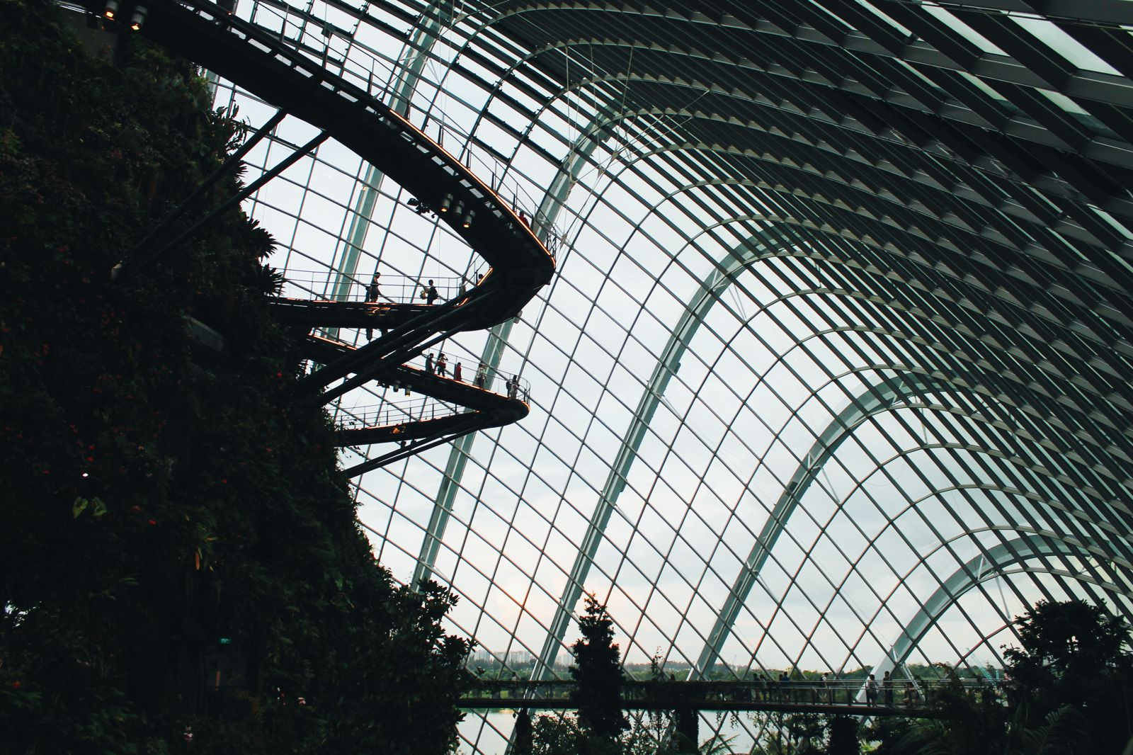 Under The Dome And Into The Forest... In Singapore, Flower Dome and Cloud Forest, Gardens By The Bay (15)