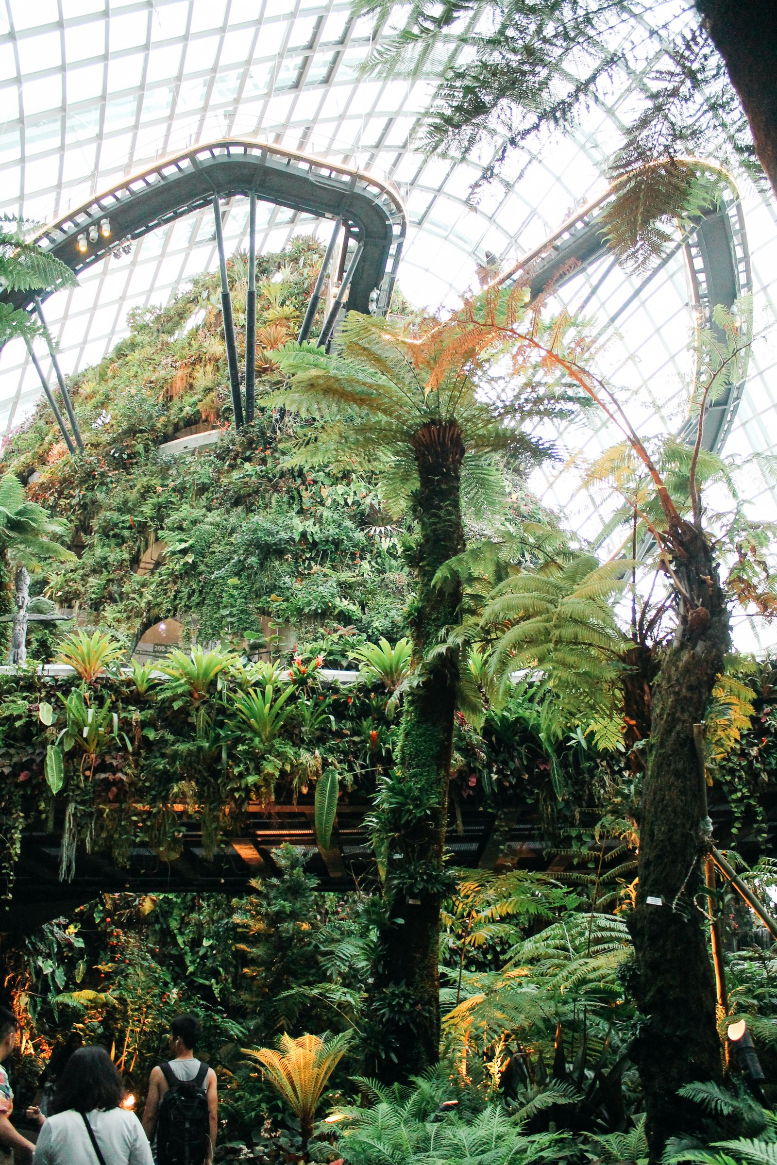 Under The Dome And Into The Forest... In Singapore, Flower Dome and Cloud Forest, Gardens By The Bay (18)