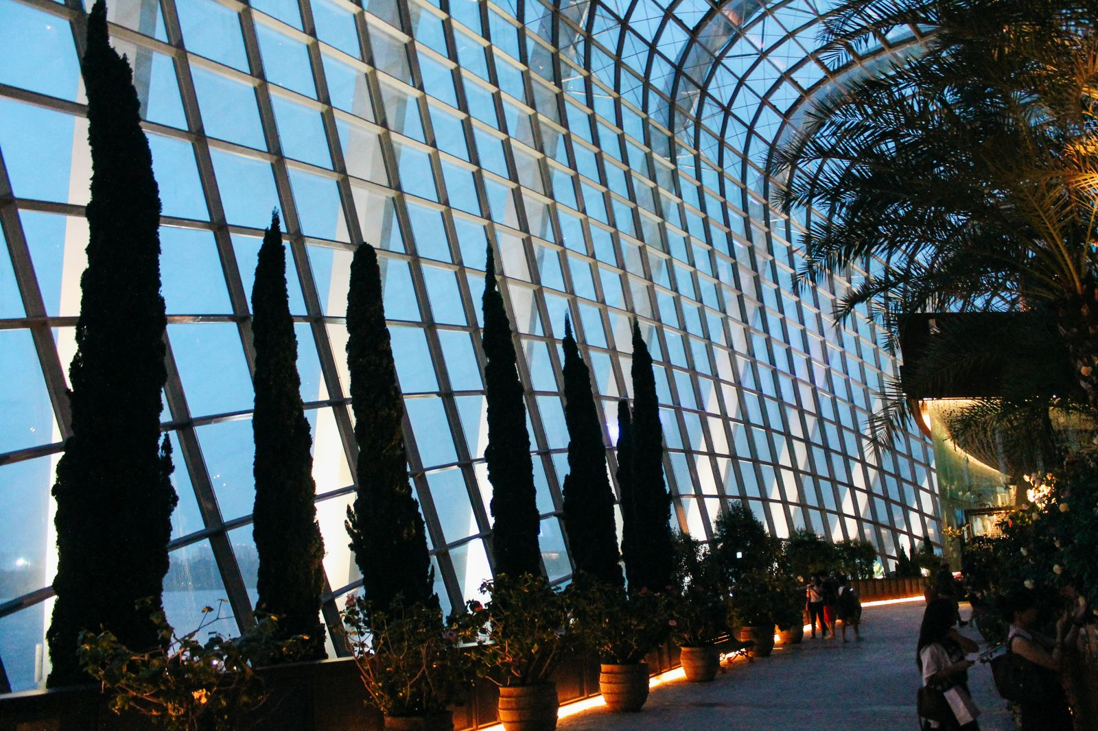 Under The Dome And Into The Forest... In Singapore, Flower Dome and Cloud Forest, Gardens By The Bay (22)