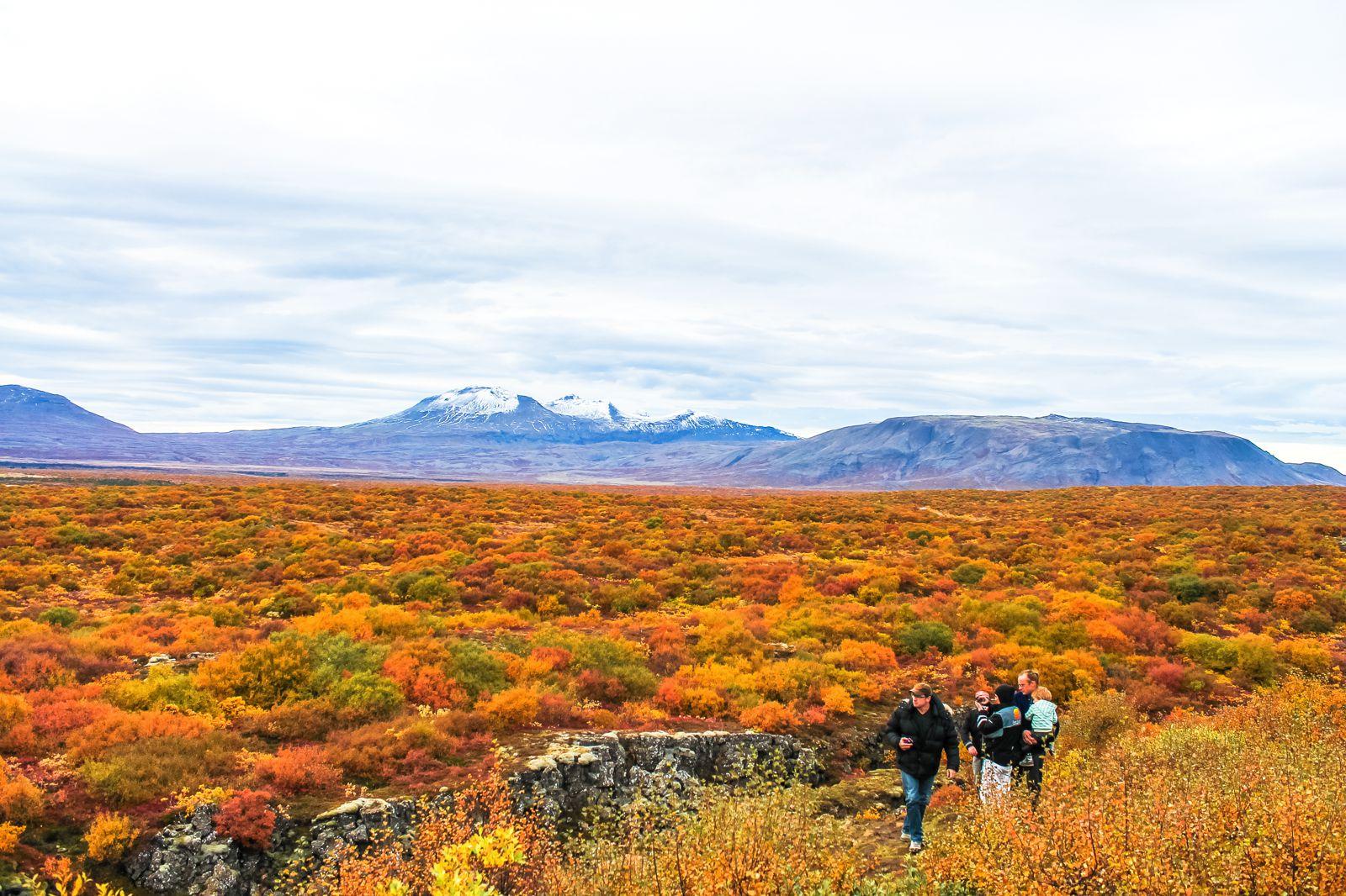 The Northern Lights, Eyjafjallajökull And Þingvellir National Park (8)