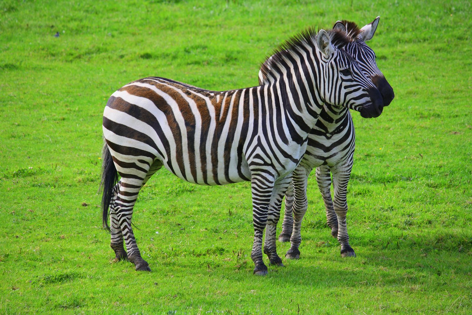 Blair Drummond Safari Park, Scotland, UK (4)
