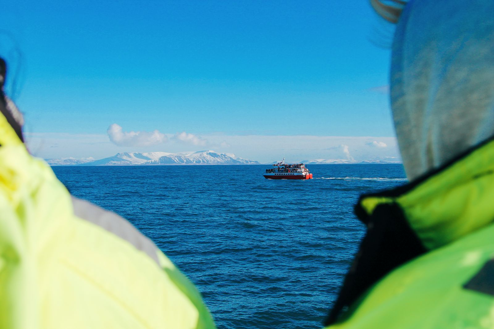 Here Is How To See Whales (And Dolphins) In Iceland! Whale watching in Reykjavik (38) (10)