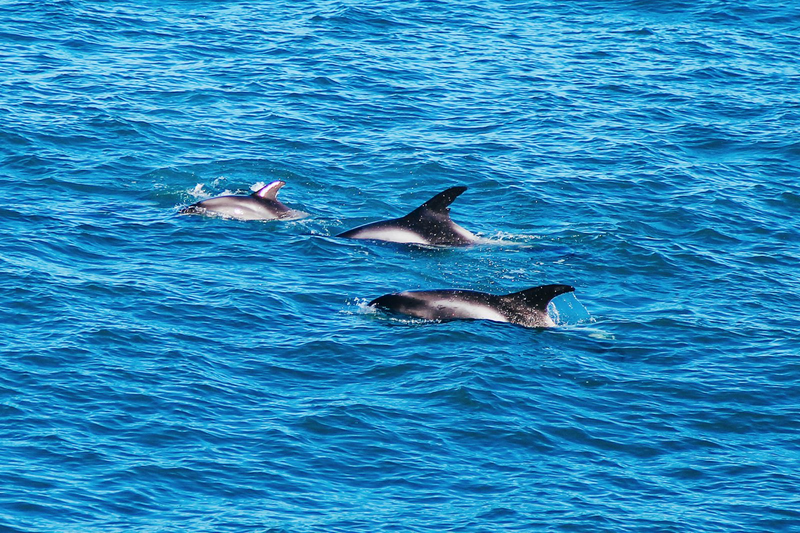 Here Is How To See Whales (And Dolphins) In Iceland! Whale watching in Reykjavik (38) (27)