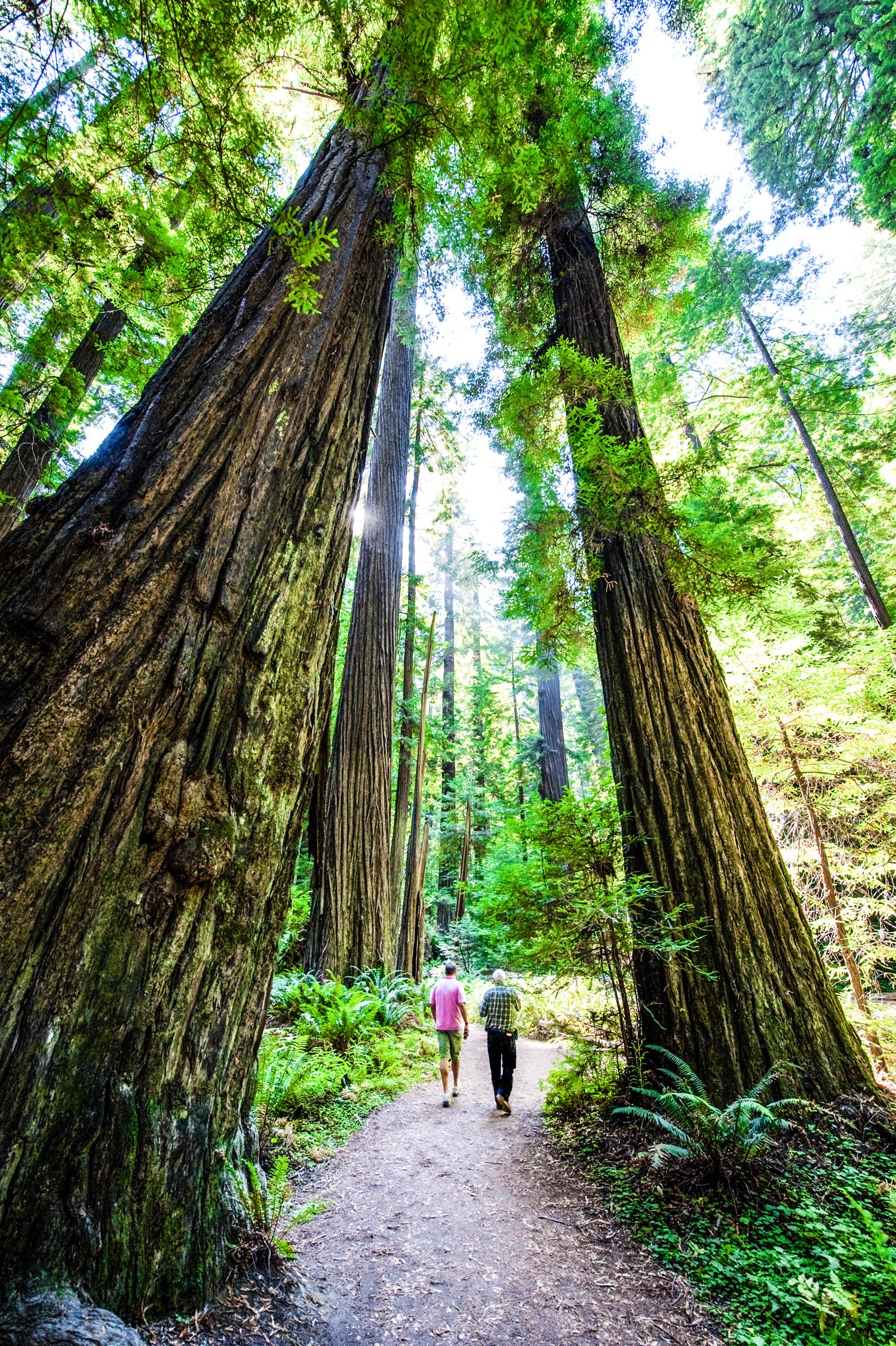 The Ultimate California Road Trip: 19 Places To Stop, Eat, See and Explore (10)