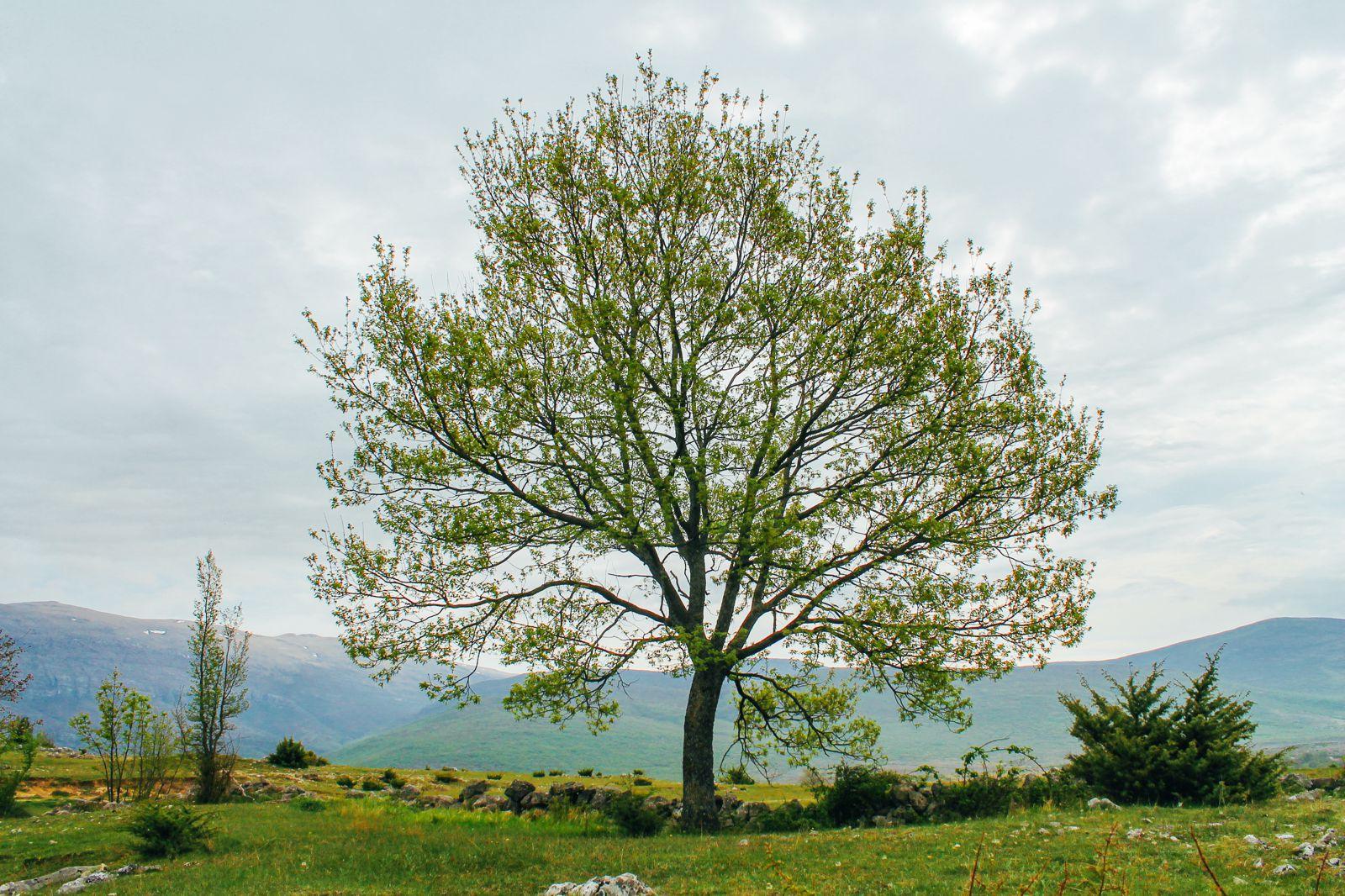 Countryside Off-roading In Croatia... with Dalmatia Explorer (11)