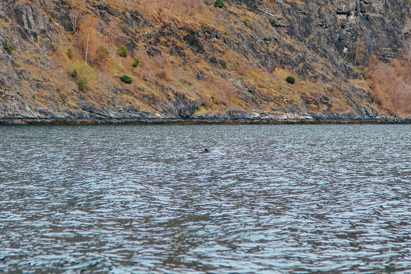 Fjord Safari... in Flam, Norway (24)