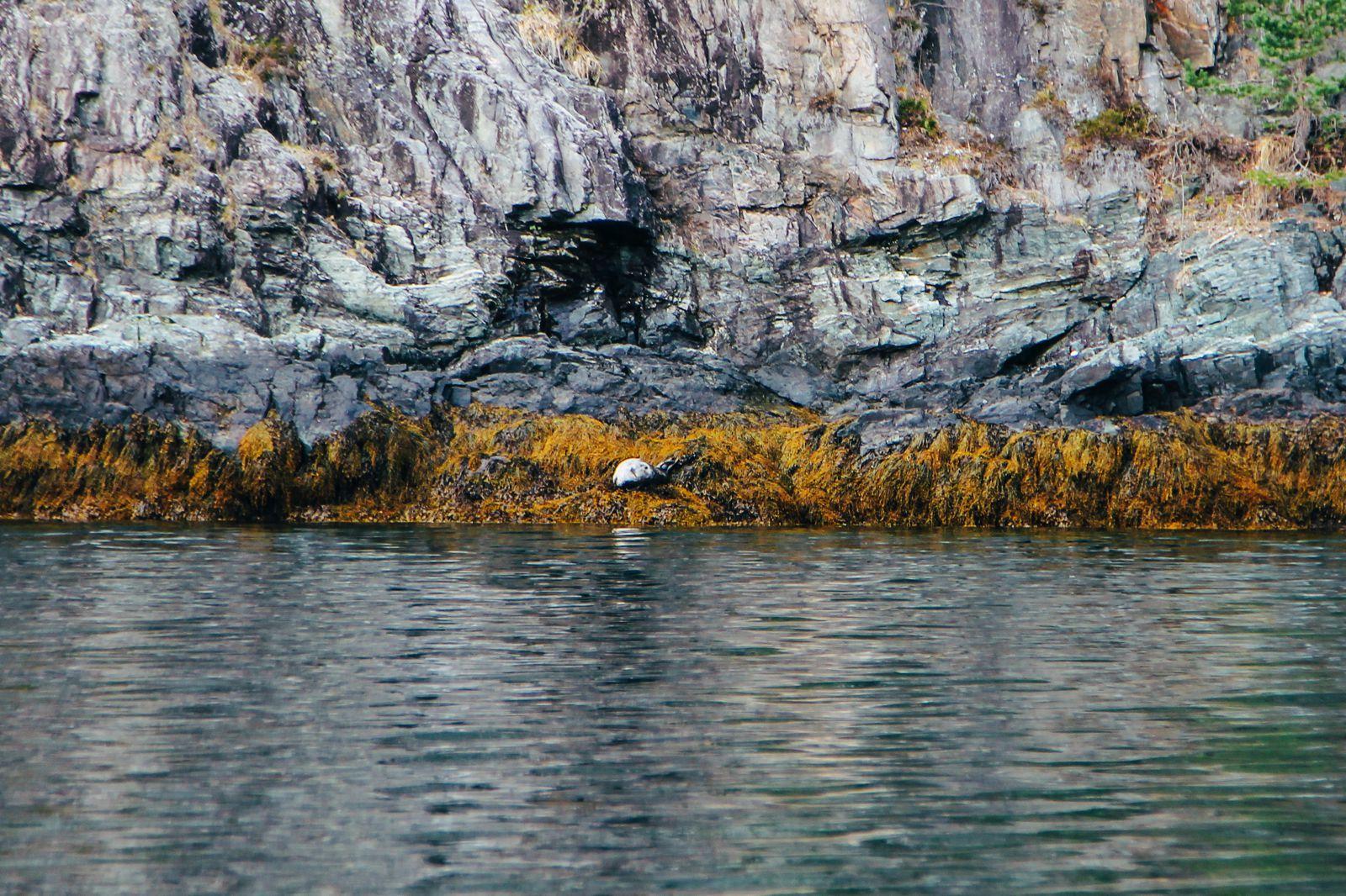 Fjord Safari... in Flam, Norway (30)