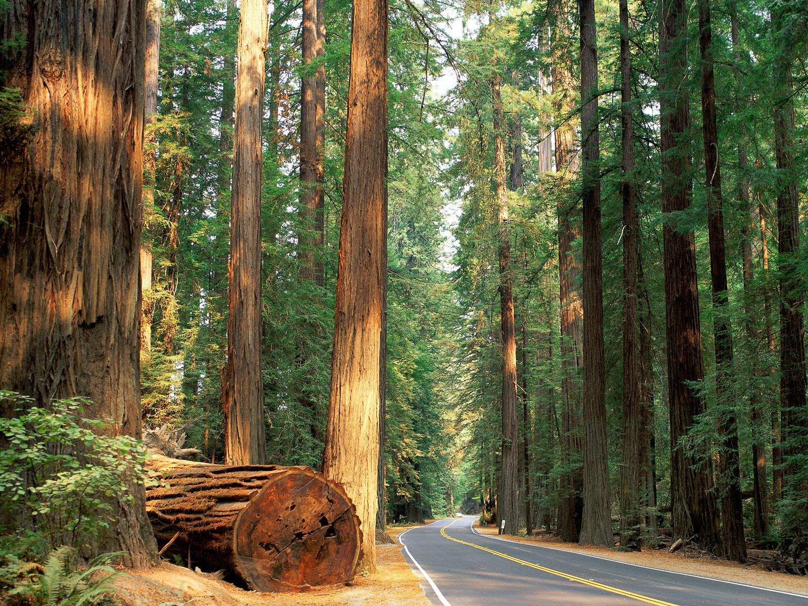 The Ultimate California Road Trip: 19 Places To Stop, Eat, See and Explore! (5)