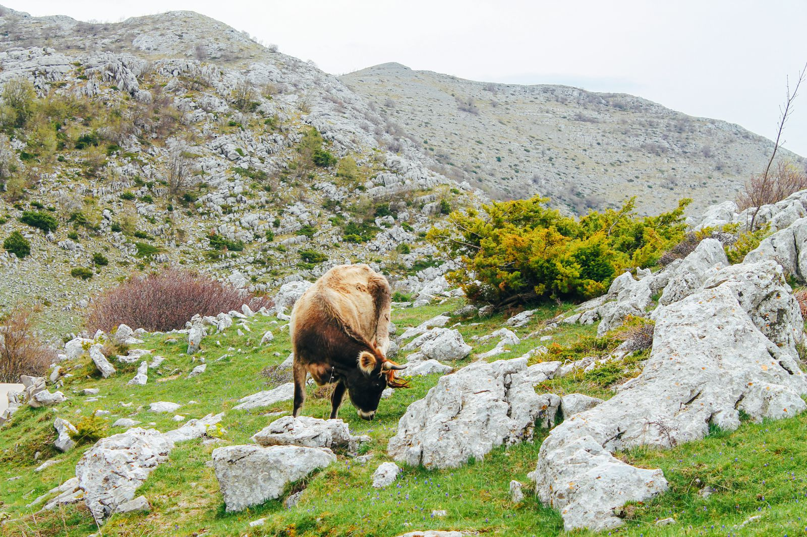 Up In the Biokovo Mountains... In Croatia (15)
