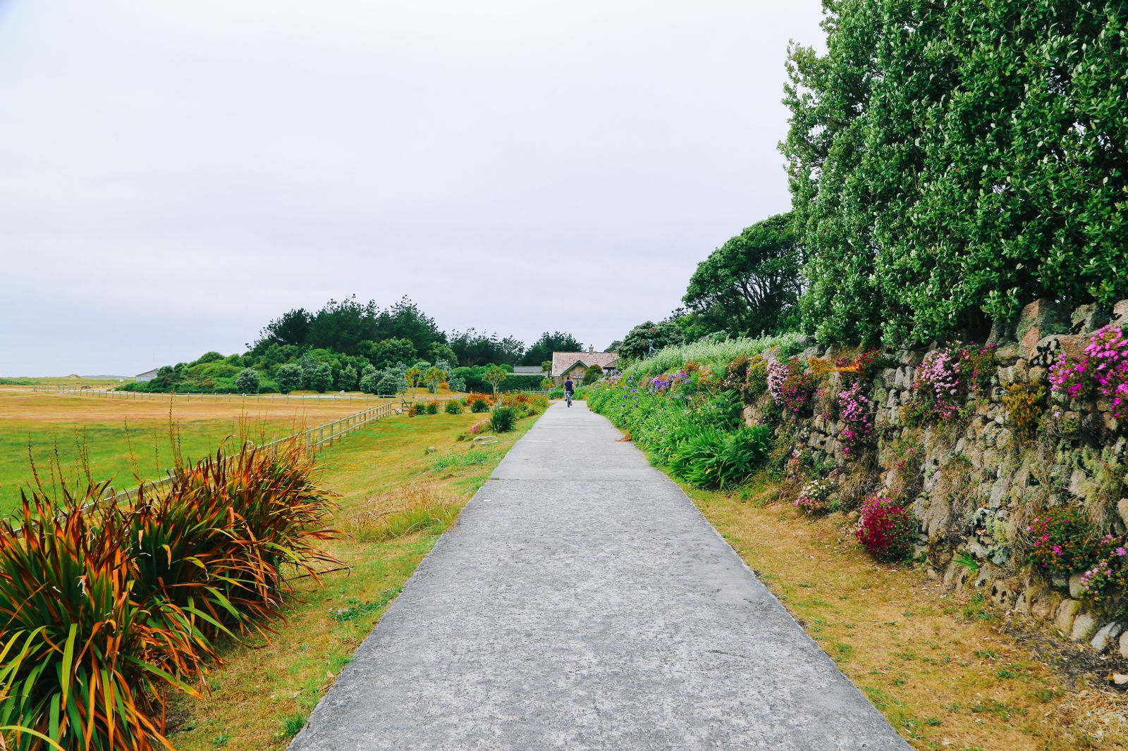 A Day On Tresco Island! Tresco Abbey Gardens (8)