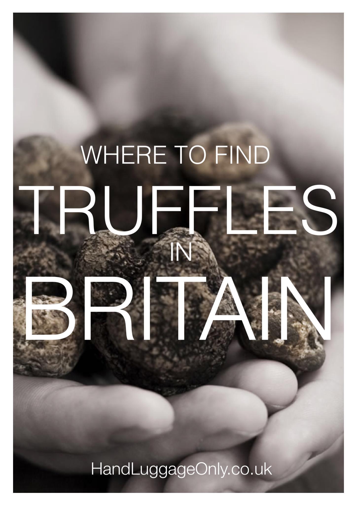 Everyday I'm Truffling: Where To Go Truffle Hunting In Britain (6)