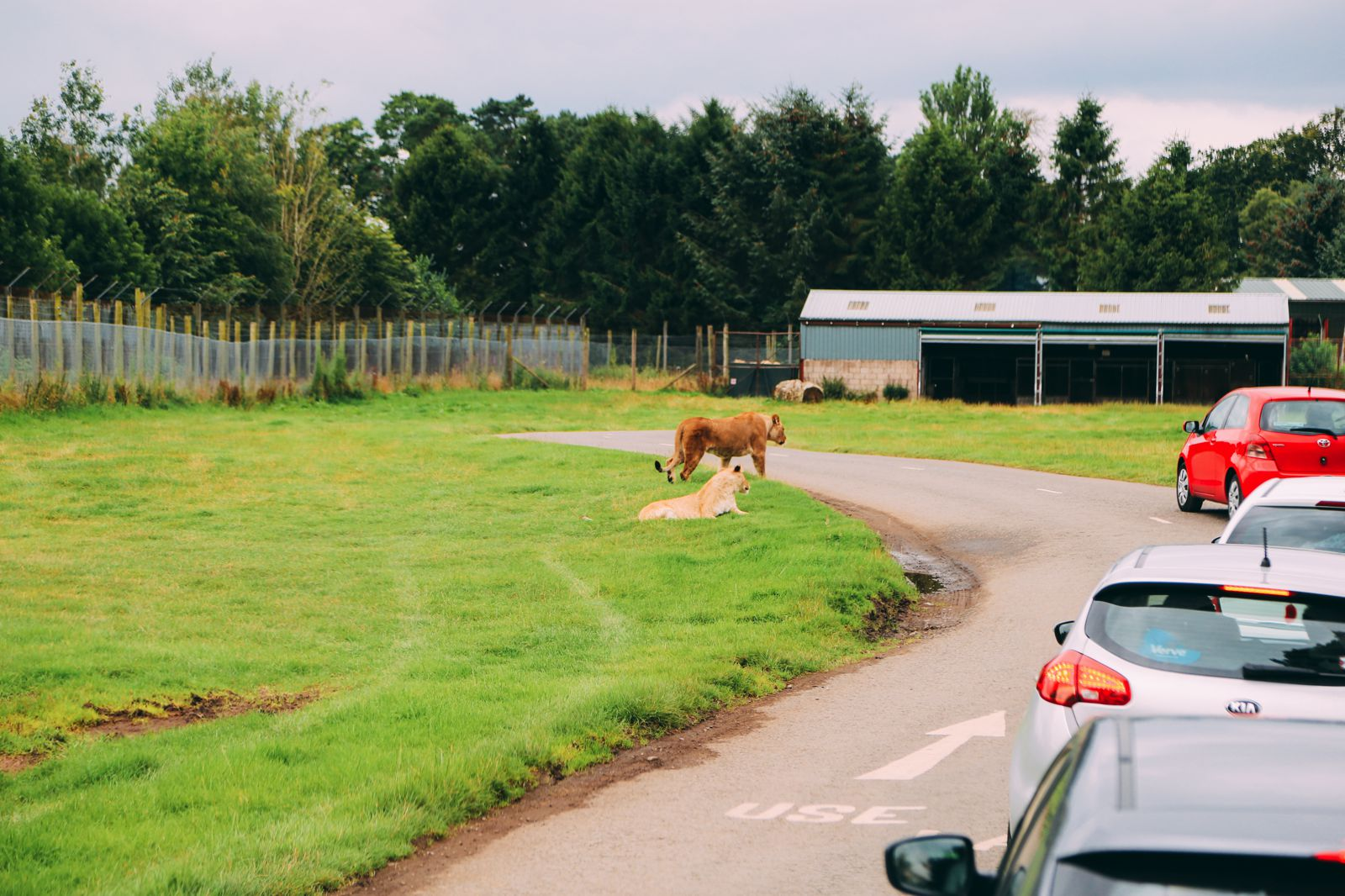 Safari In Scotland - The Photo Diary at Blair Drummond Safari and Adventure Park (3)