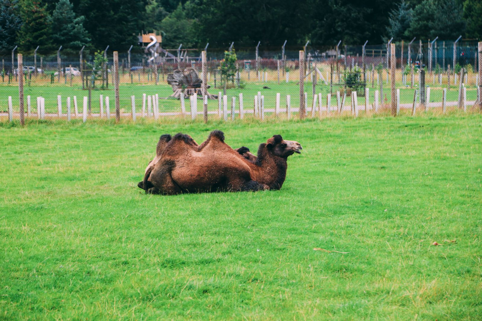 Safari In Scotland - The Photo Diary at Blair Drummond Safari and Adventure Park (5)