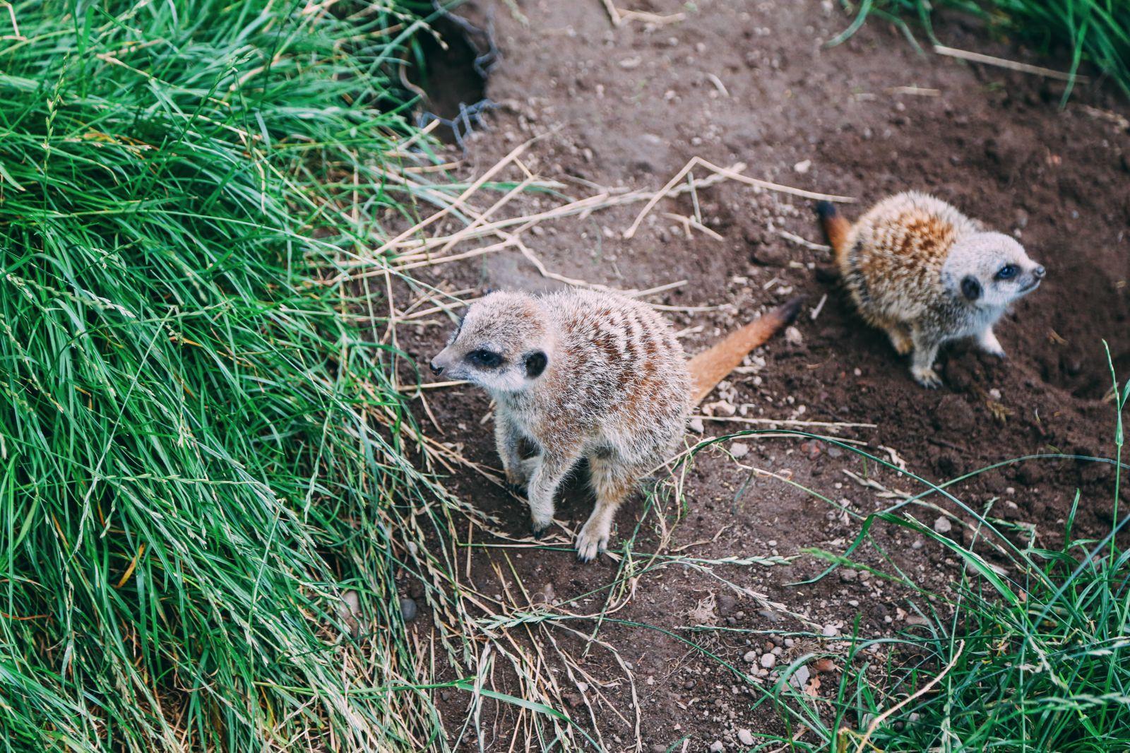 Safari In Scotland - The Photo Diary at Blair Drummond Safari and Adventure Park (16)
