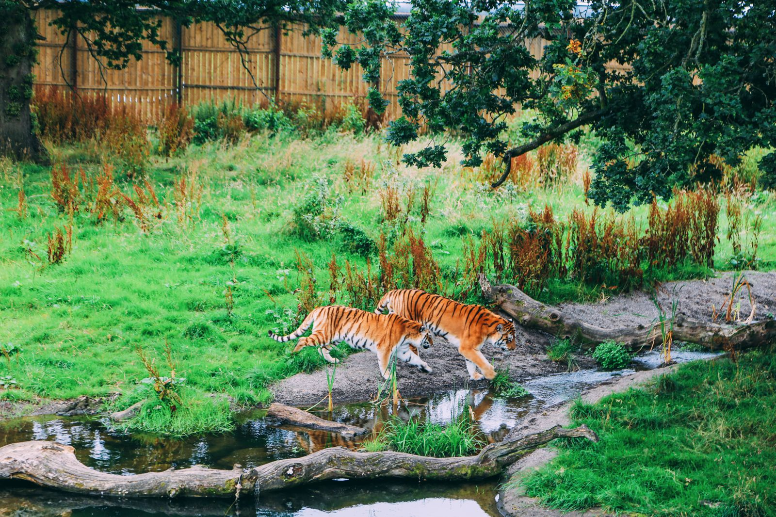 Safari In Scotland - The Photo Diary at Blair Drummond Safari and Adventure Park (22)