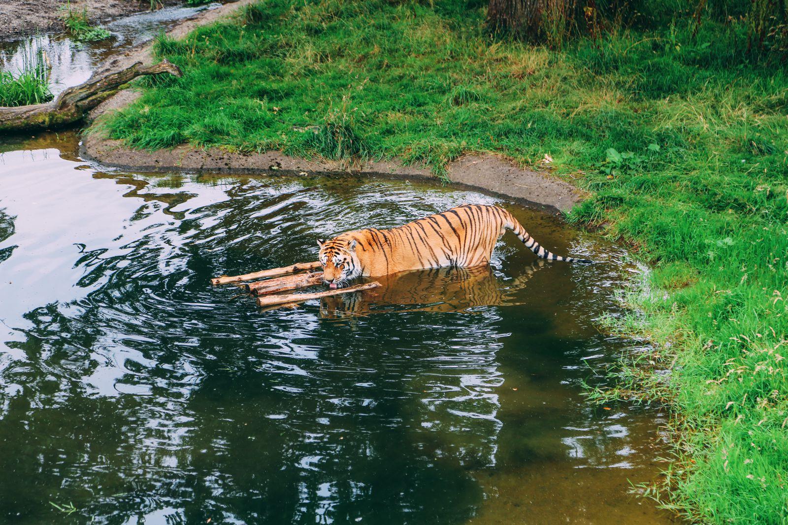 Safari In Scotland - The Photo Diary at Blair Drummond Safari and Adventure Park (23)