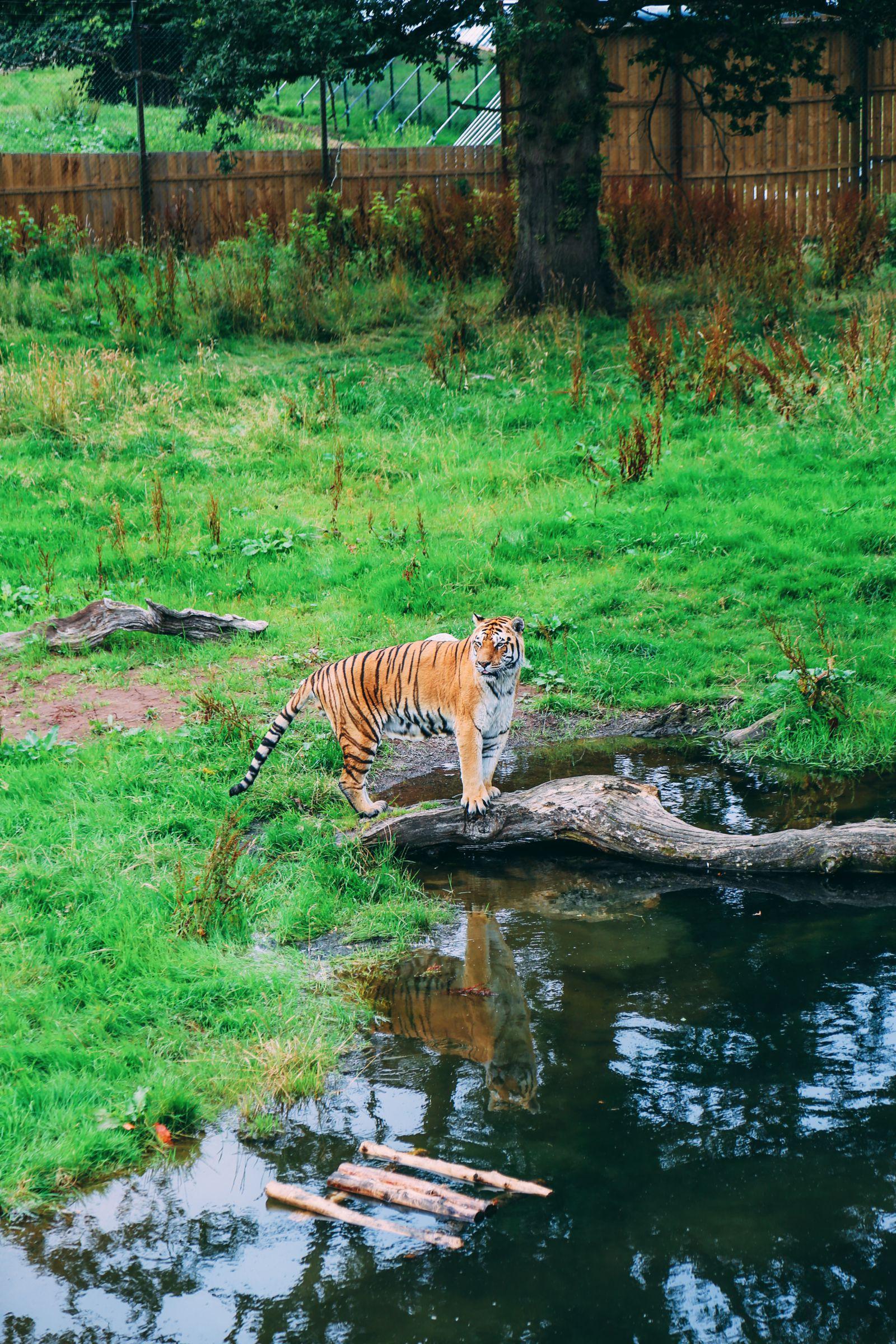 Safari In Scotland - The Photo Diary at Blair Drummond Safari and Adventure Park (24)