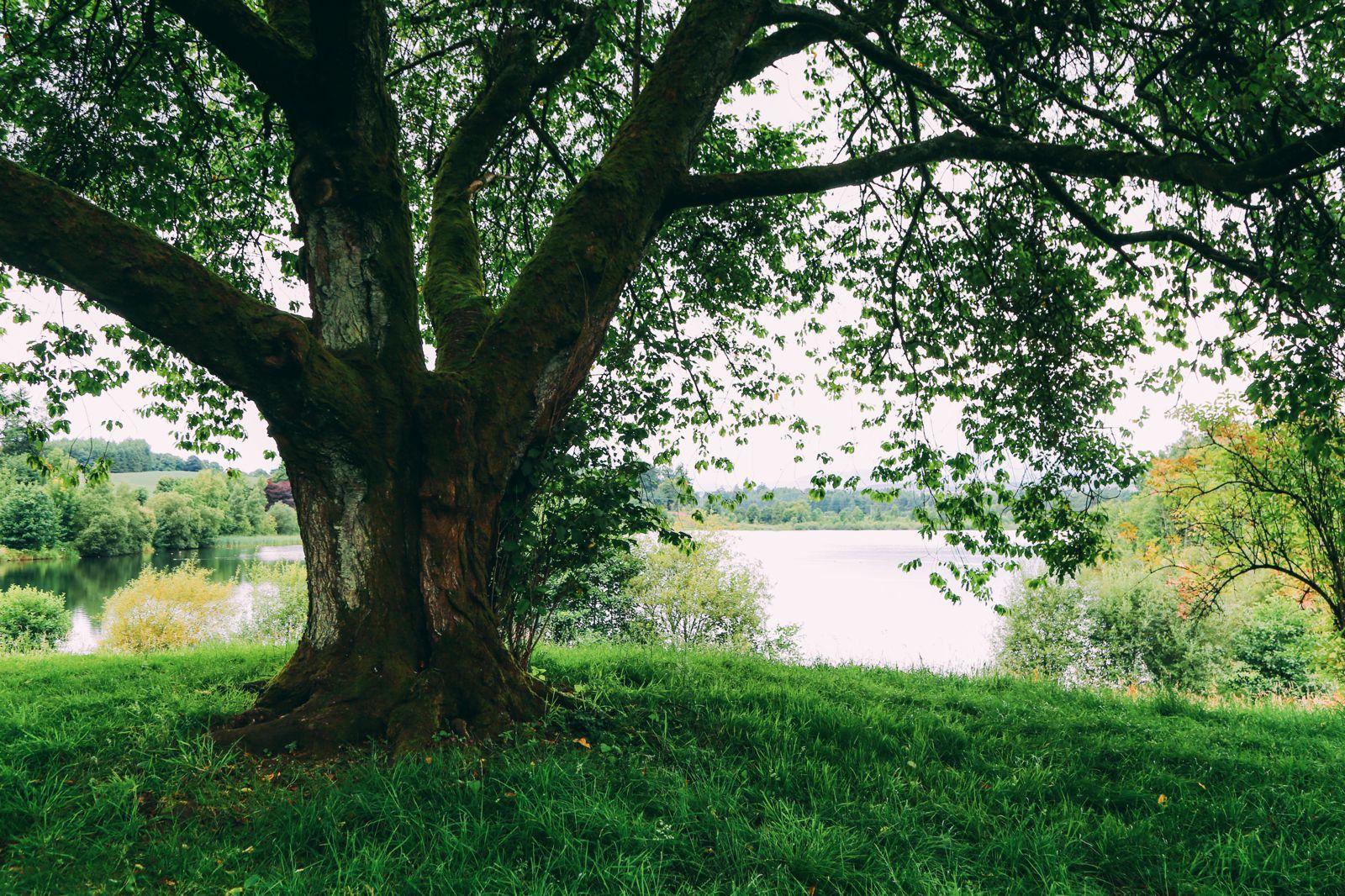 Safari In Scotland - The Photo Diary at Blair Drummond Safari and Adventure Park (26)