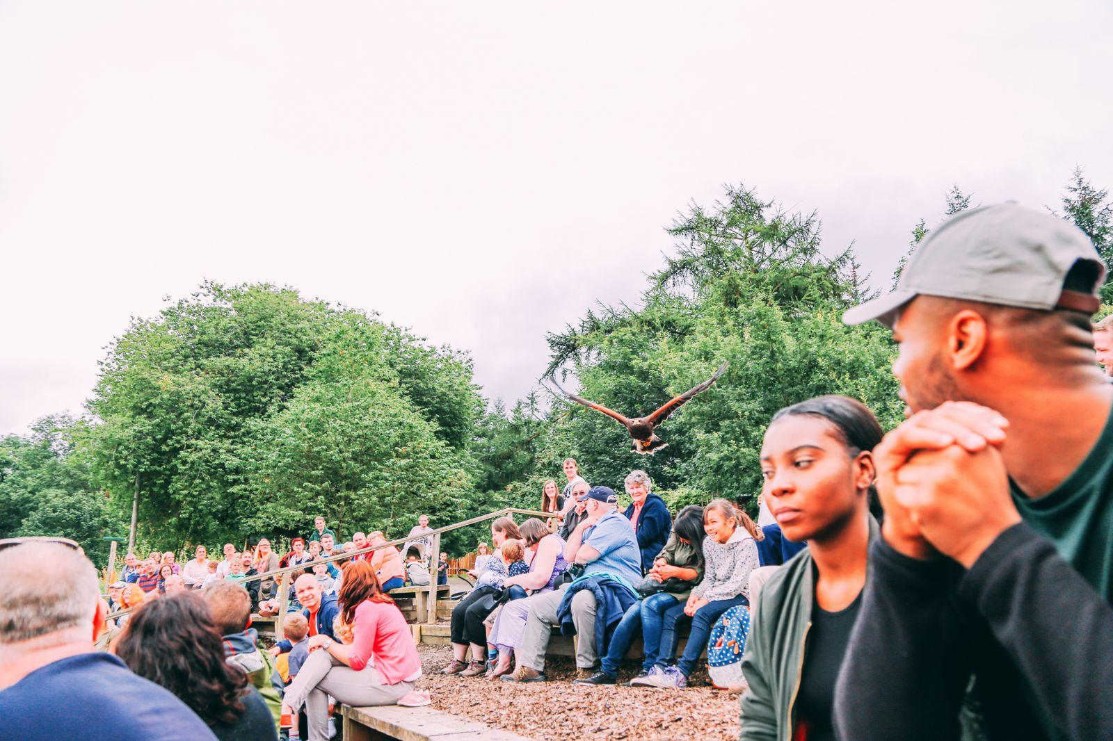 Safari In Scotland - The Photo Diary at Blair Drummond Safari and Adventure Park (28)