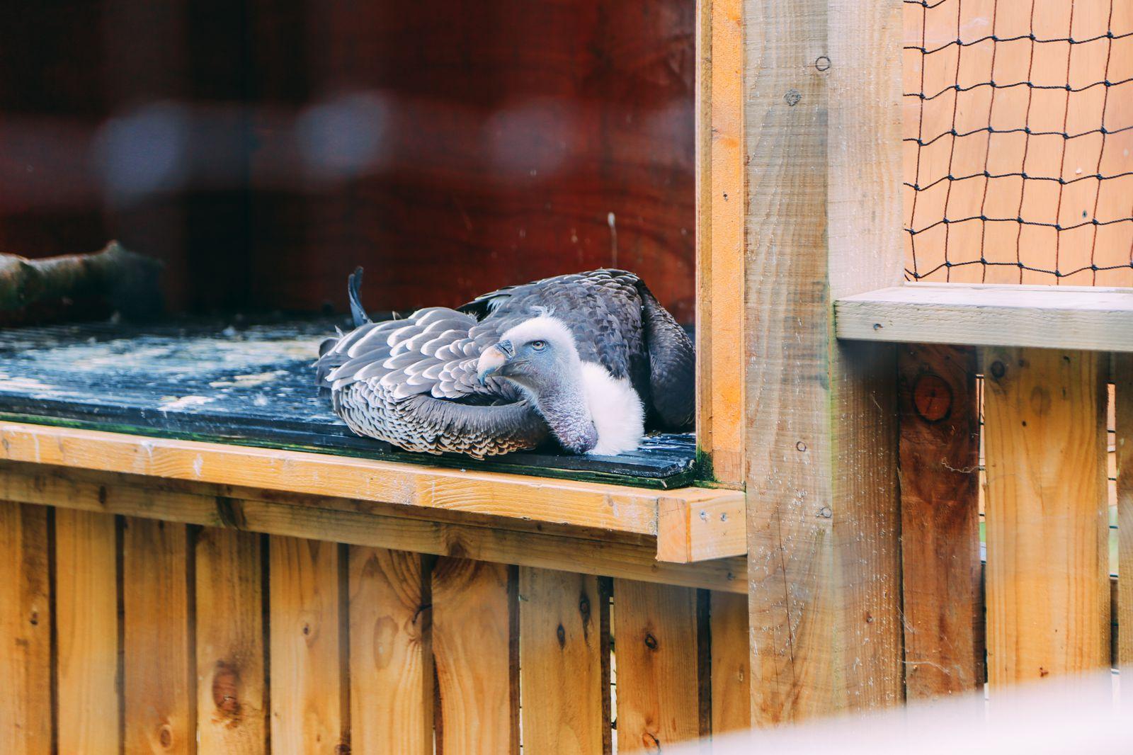 Safari In Scotland - The Photo Diary at Blair Drummond Safari and Adventure Park (33)