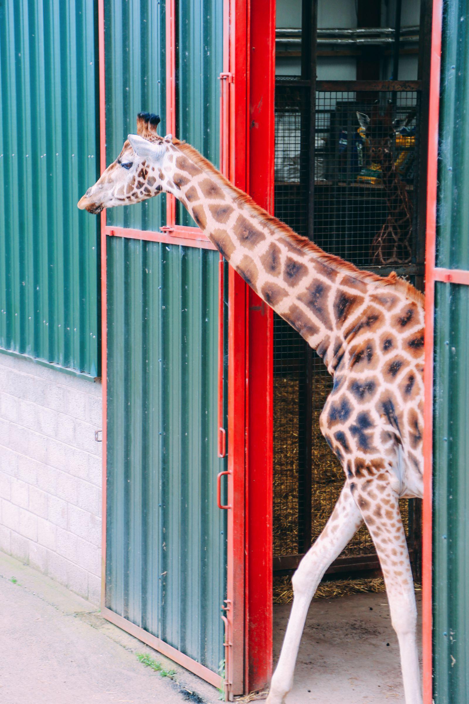Safari In Scotland - The Photo Diary at Blair Drummond Safari and Adventure Park (36)