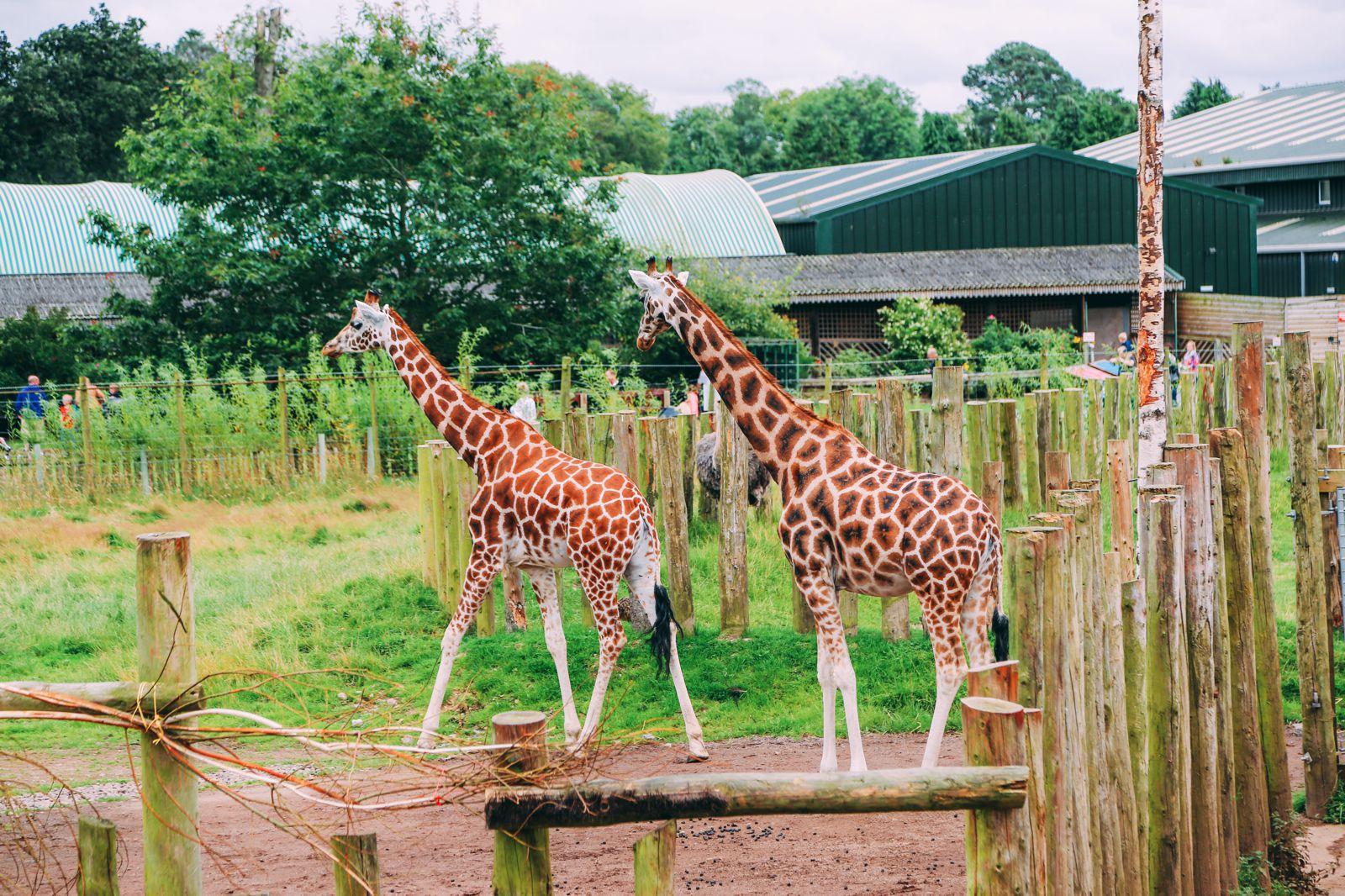 Safari In Scotland - The Photo Diary at Blair Drummond Safari and Adventure Park (37)