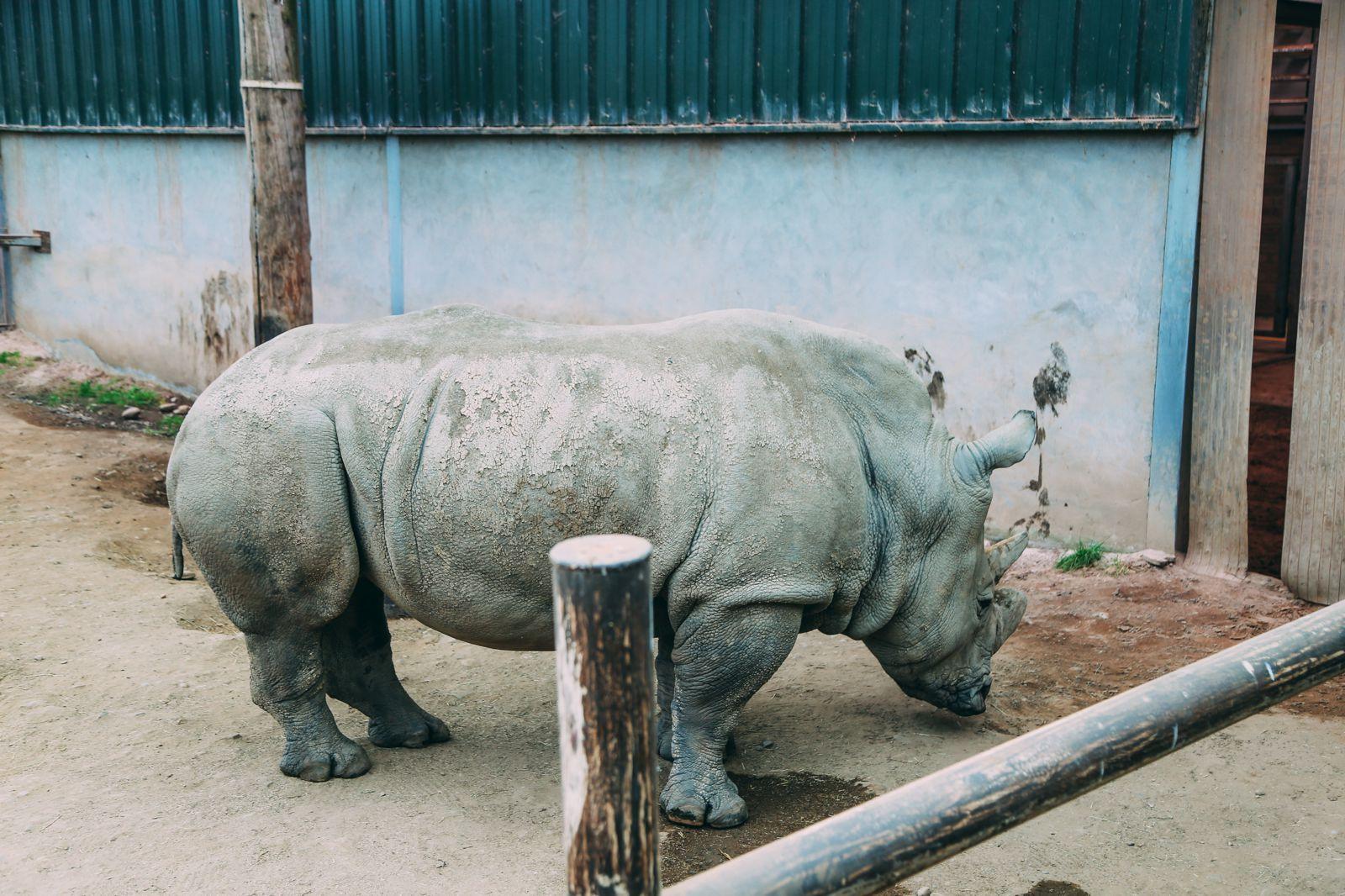 Safari In Scotland - The Photo Diary at Blair Drummond Safari and Adventure Park (42)