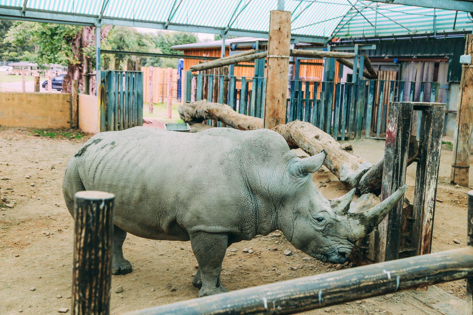 Safari In Scotland - The Photo Diary at Blair Drummond Safari and Adventure Park (43)