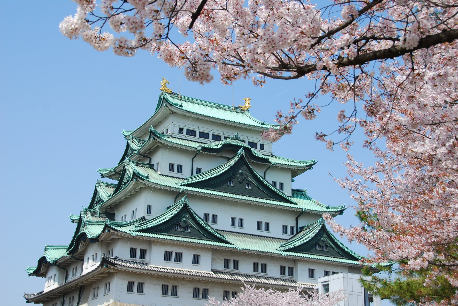 9 Cities You Have to Visit in Japan (6)