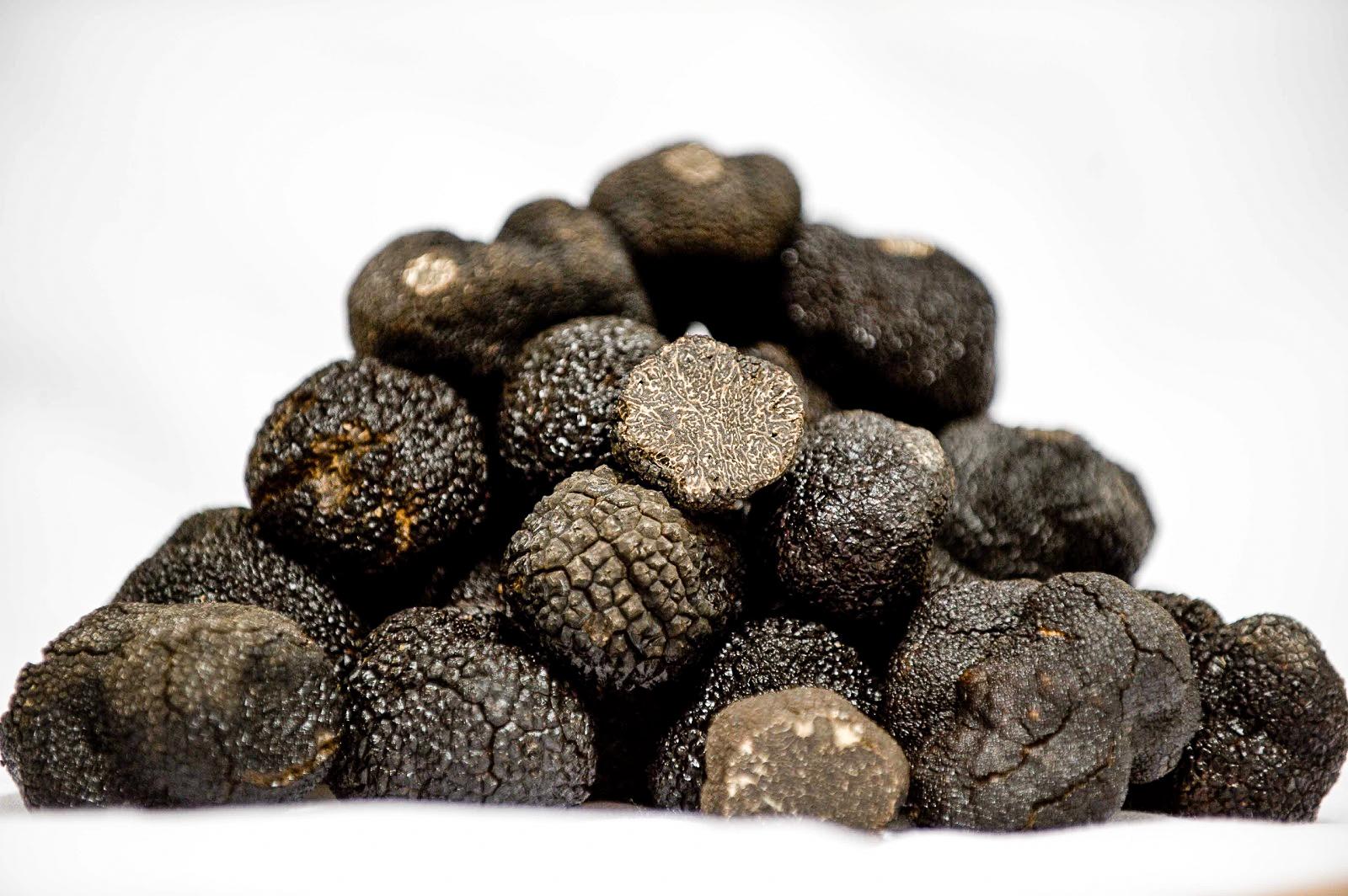 how to grow truffles uk