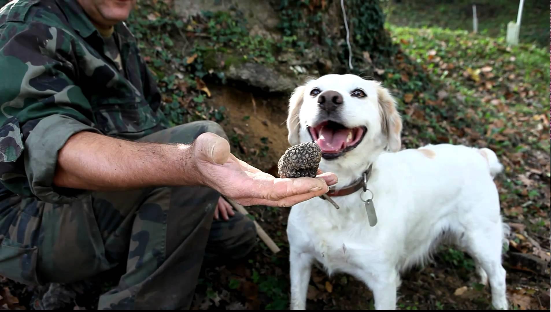 Everyday I'm Truffling: Where To Go Truffle Hunting In Britain (5)