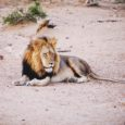 Seeing The Big 5 On Safari In Kruger National Park, South Africa
