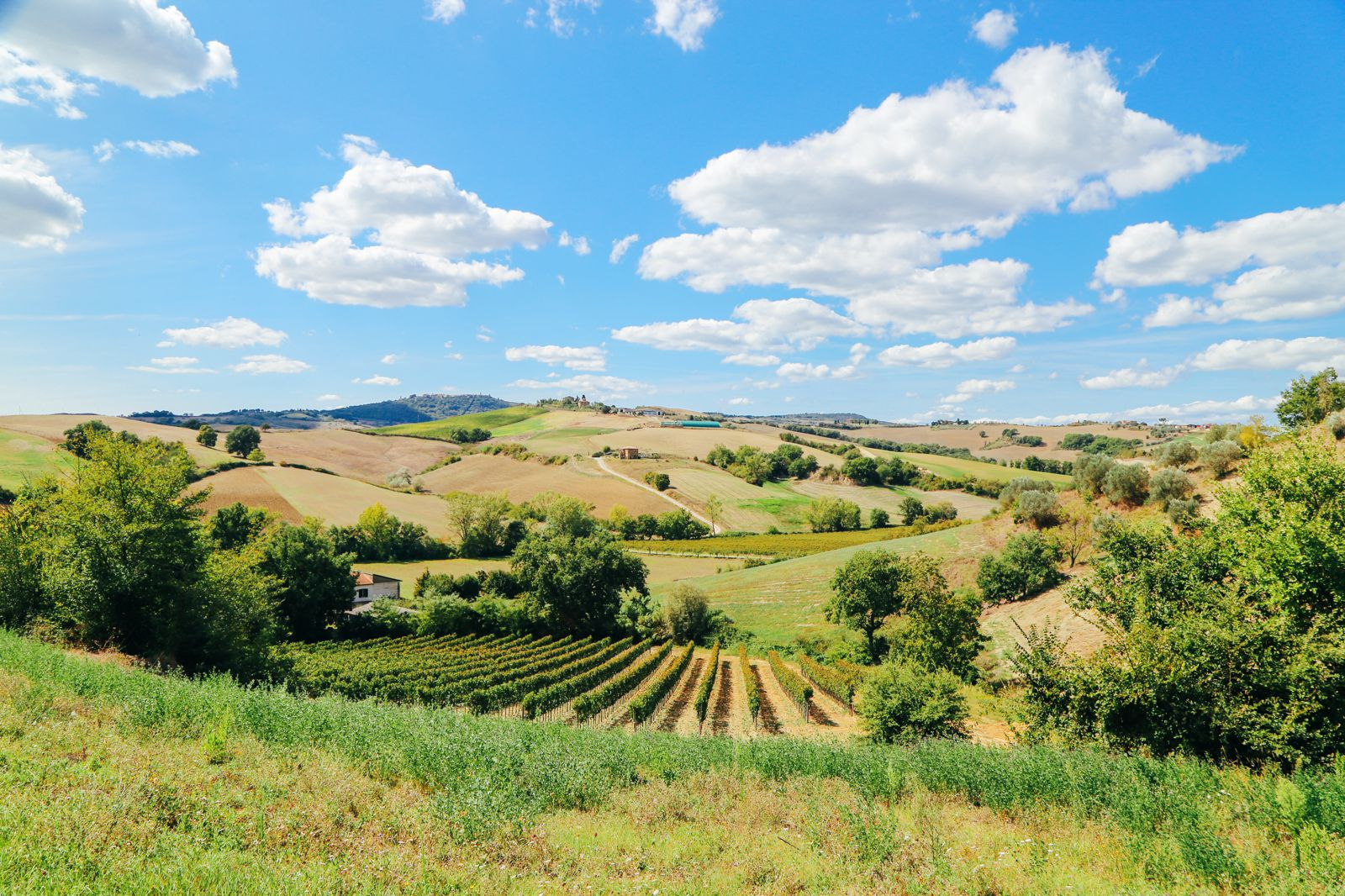 The Tuscan Countryside (6)